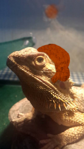 Dragon O'Brien