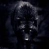 Mr. Wolfy